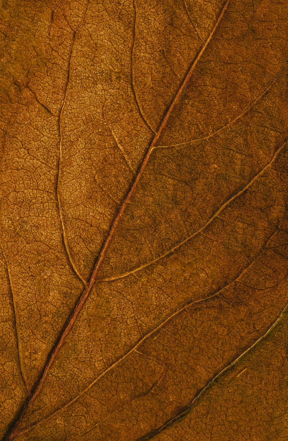 brown and black leaf in close up photography
