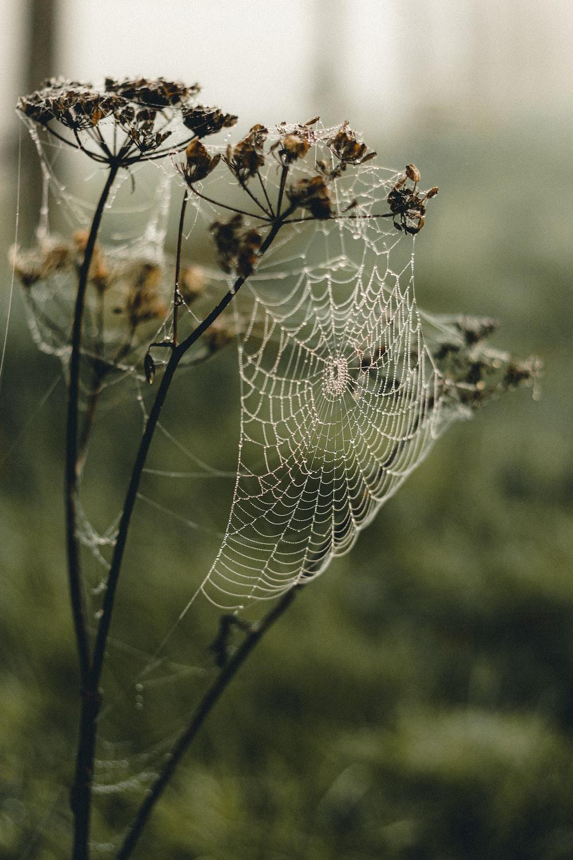 spider web on green grass during daytime