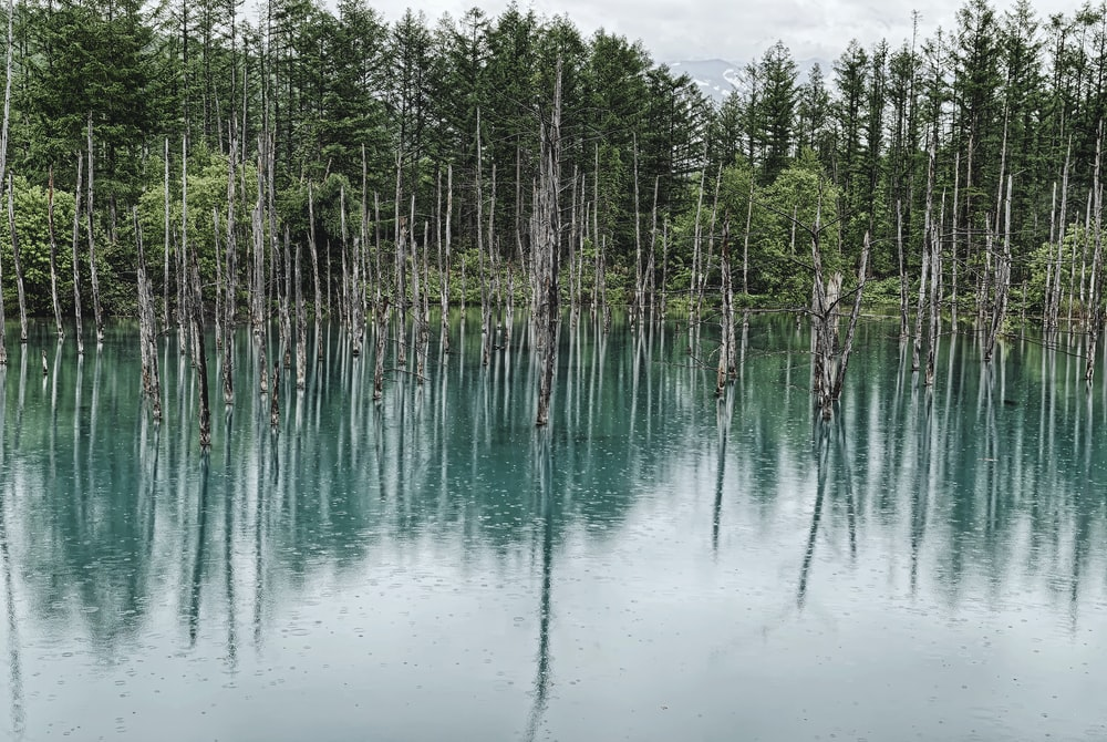 green trees on body of water during daytime