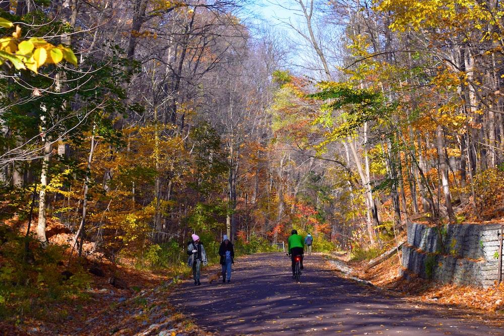 people walking on pathway between trees during daytime