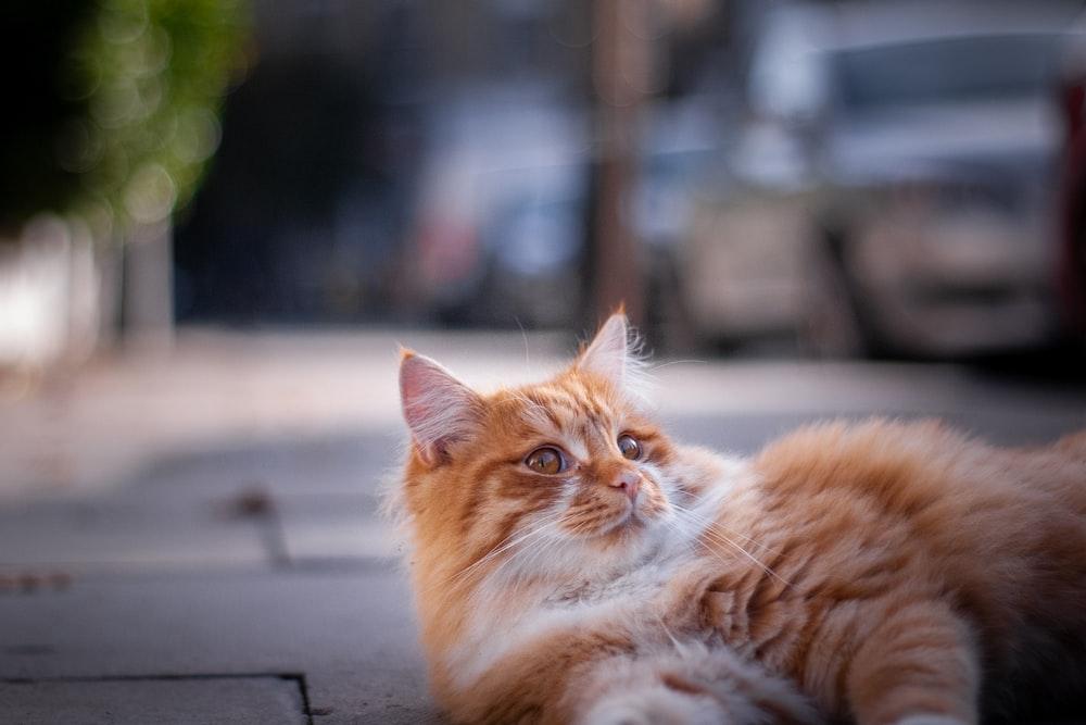 orange tabby cat lying on black surface