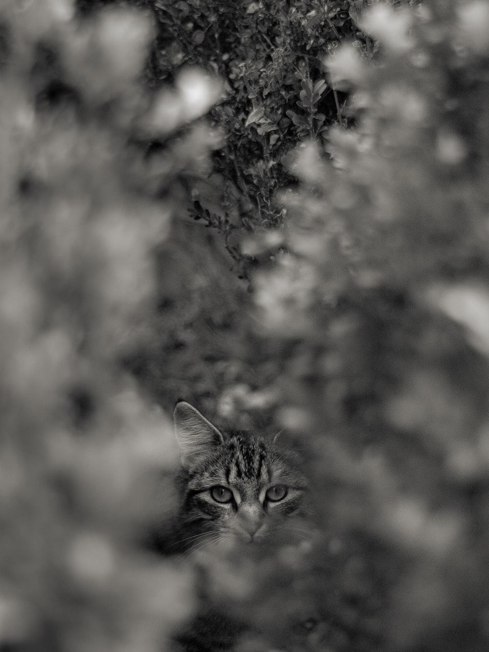 brown tabby cat in front of brown leaf tree