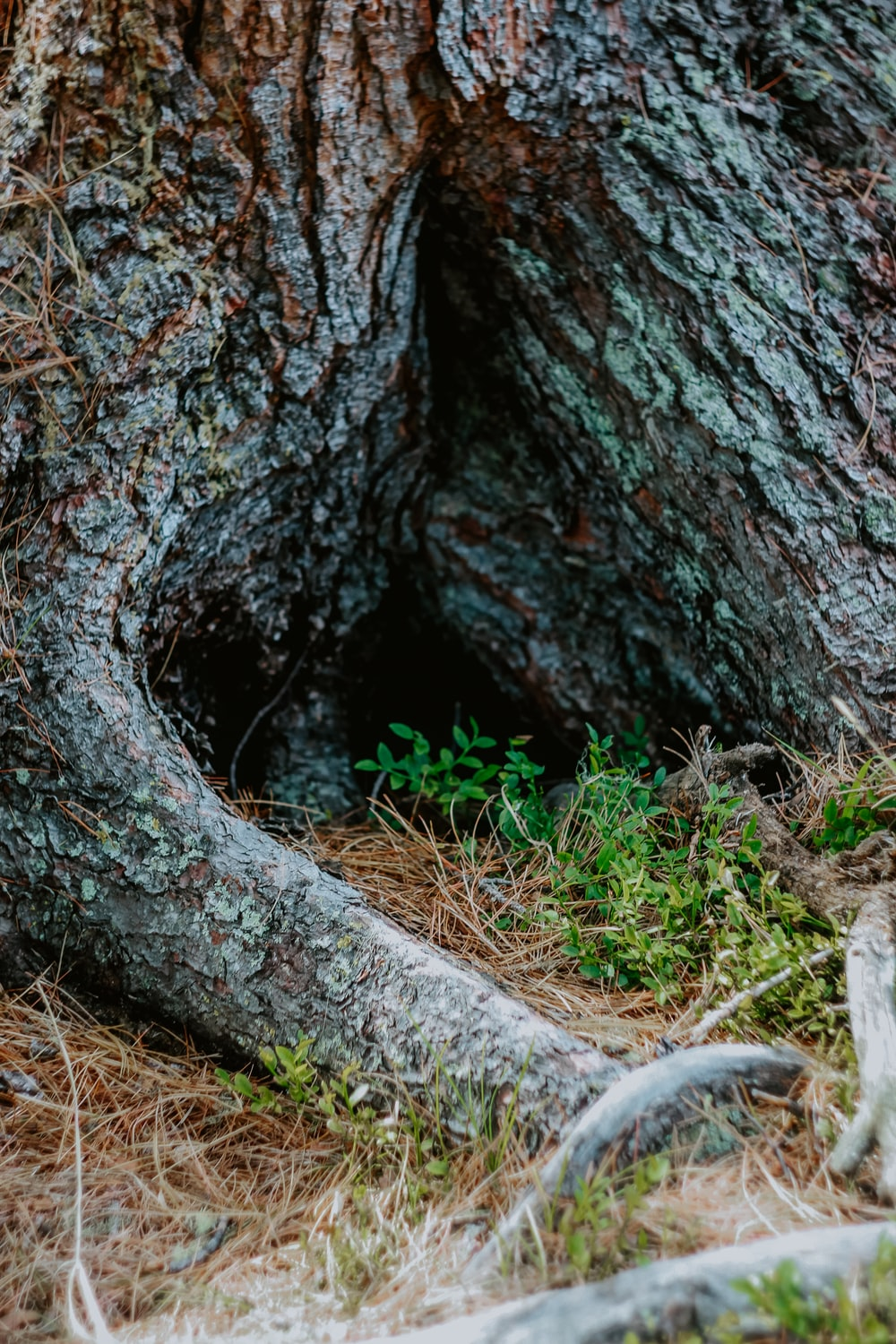 brown tree trunk with white moss