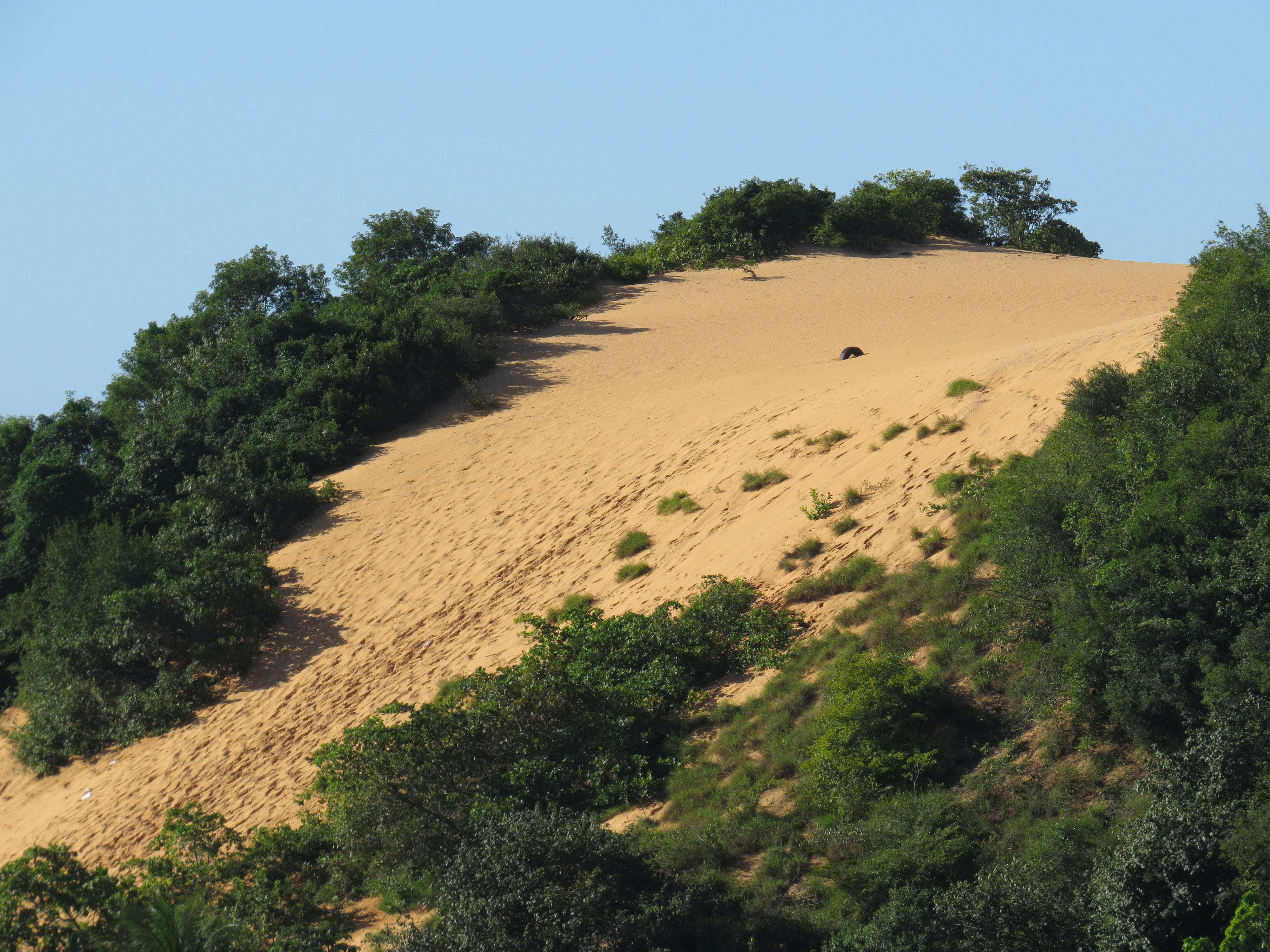green trees on brown sand under blue sky during daytime
