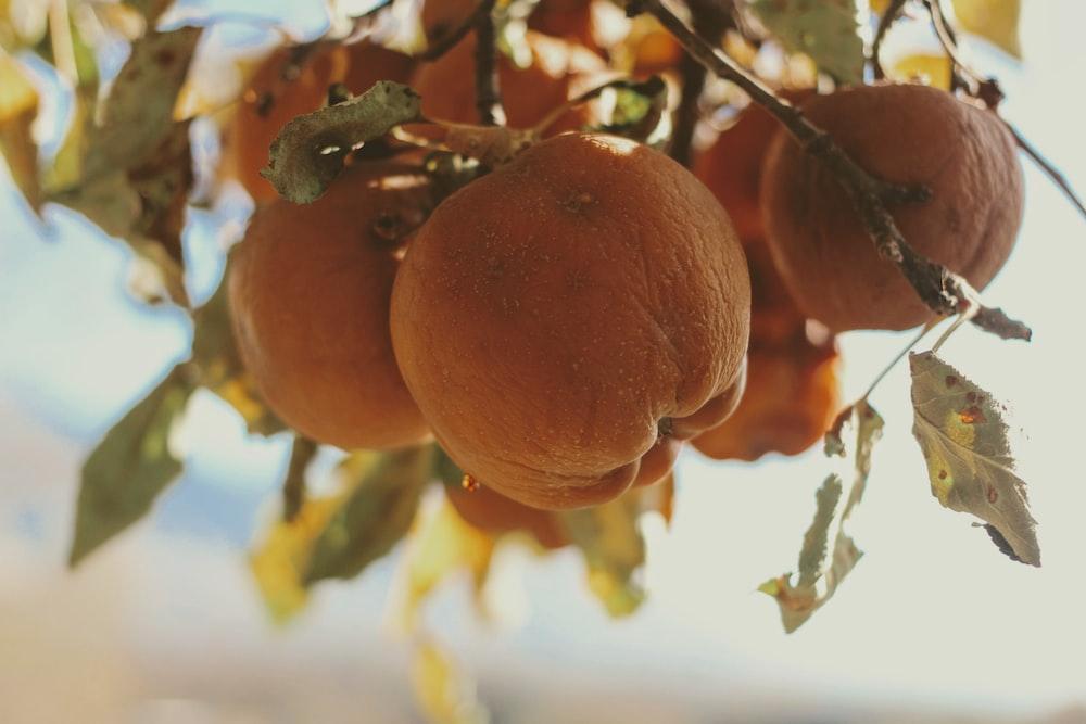 orange fruit on tree during daytime