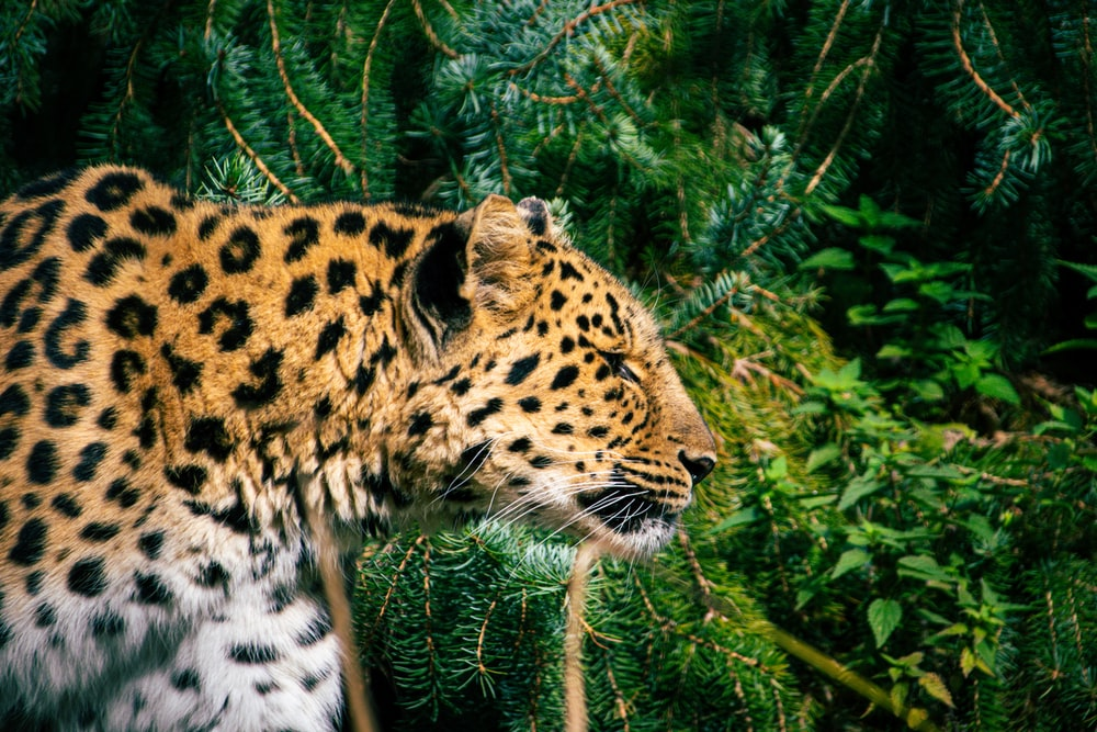 leopard on green grass during daytime