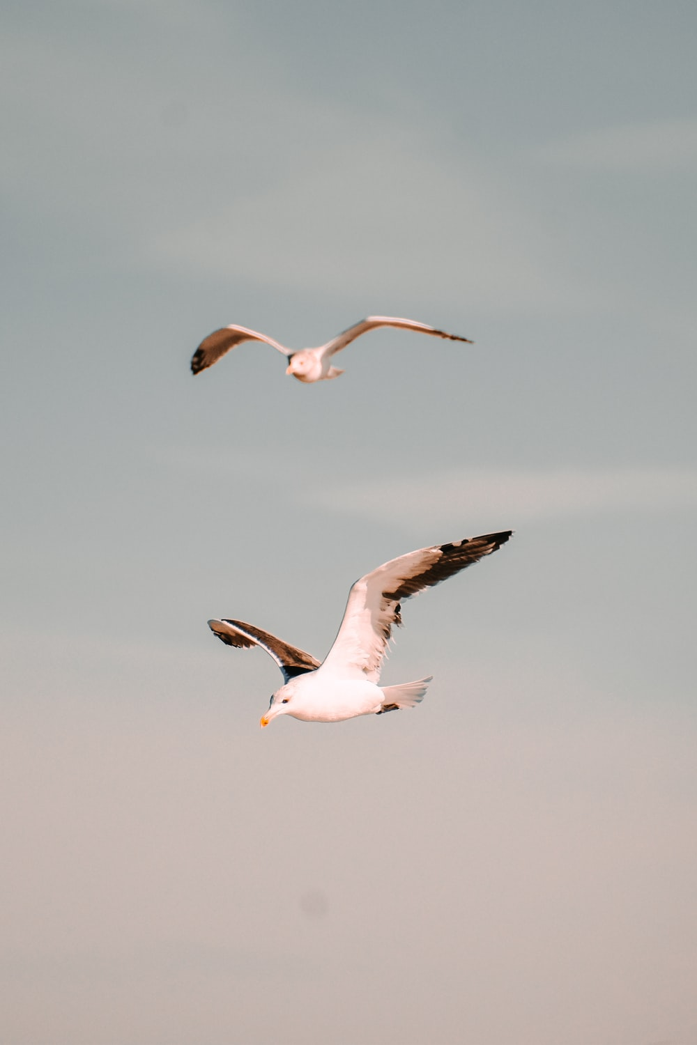 white and black birds flying under white clouds during daytime