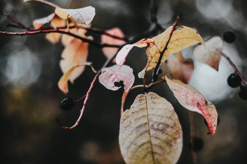 pink and green leaves in tilt shift lens