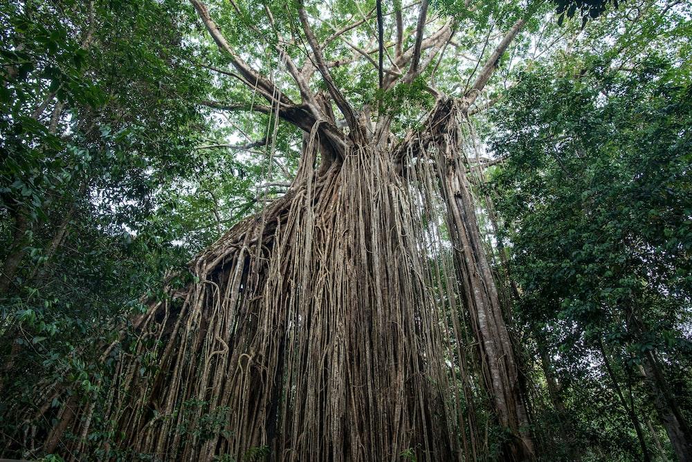 brown tree trunk during daytime