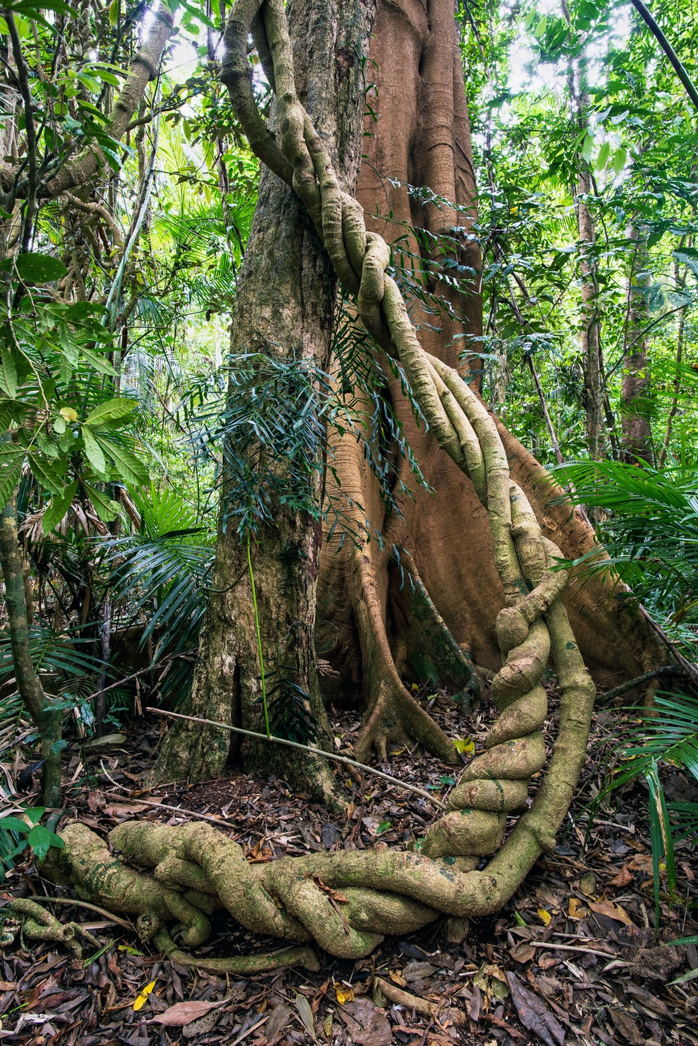 green and brown tree trunk