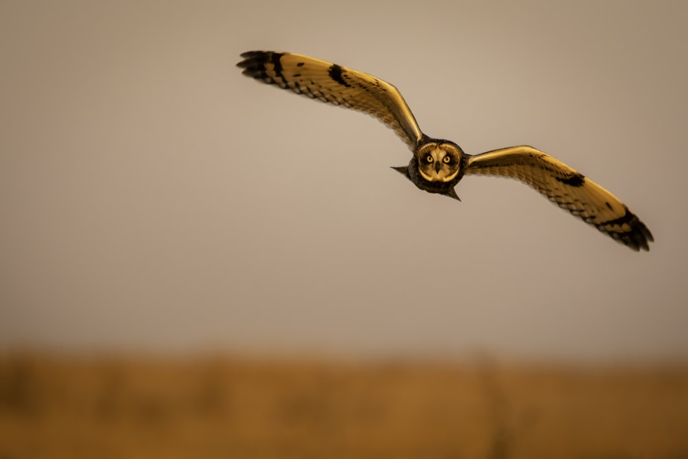brown and black owl flying