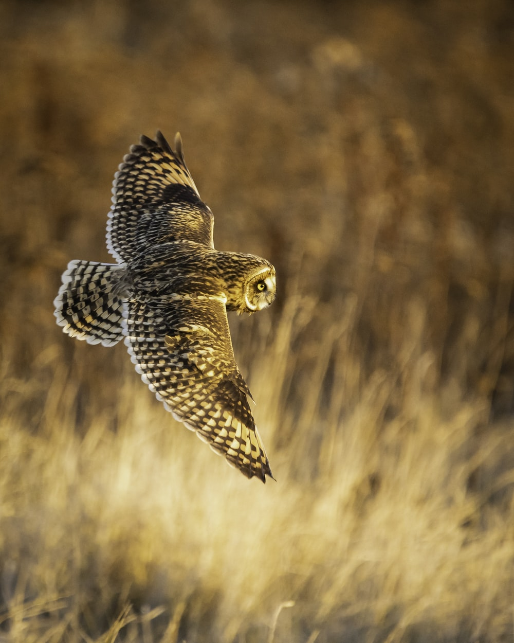 brown and black owl flying during daytime