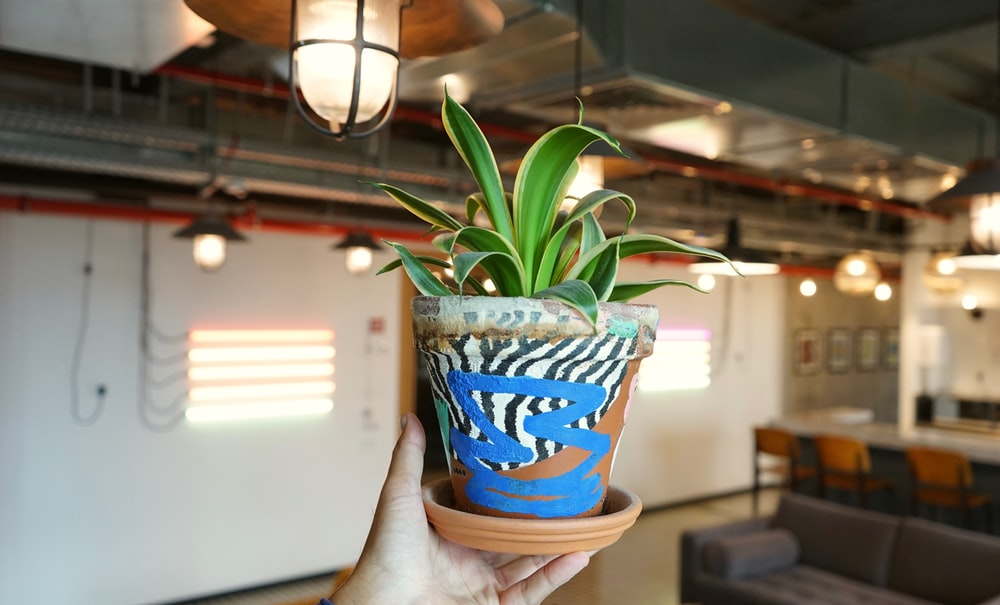 green plant in blue and white ceramic pot