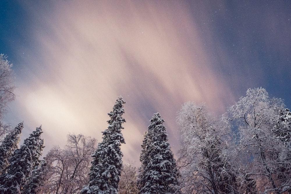 leafless trees under blue sky