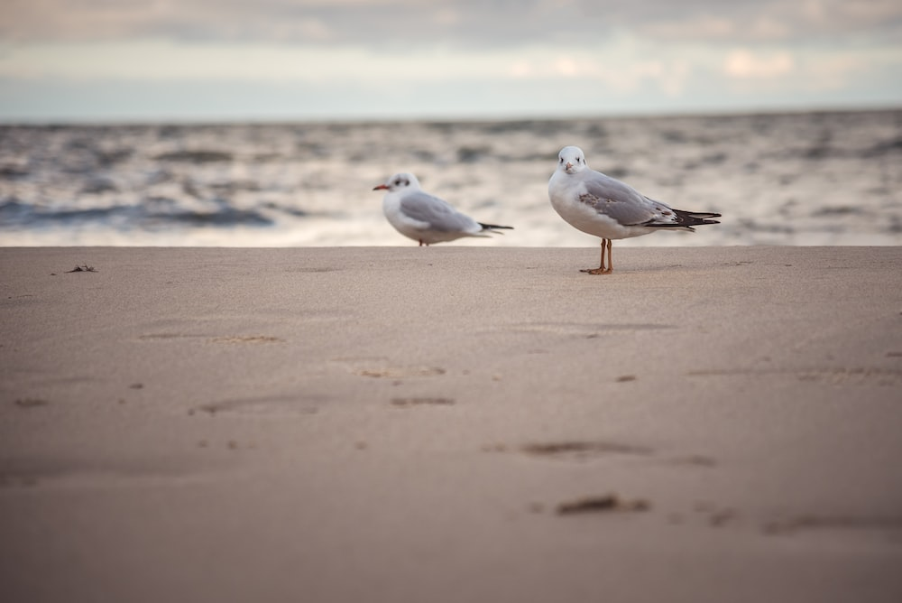 white and gray bird on brown sand during daytime