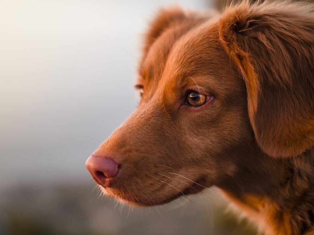 brown short coated dog in tilt shift lens
