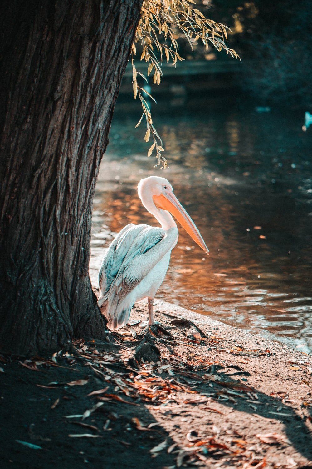 white pelican on brown tree trunk near body of water during daytime
