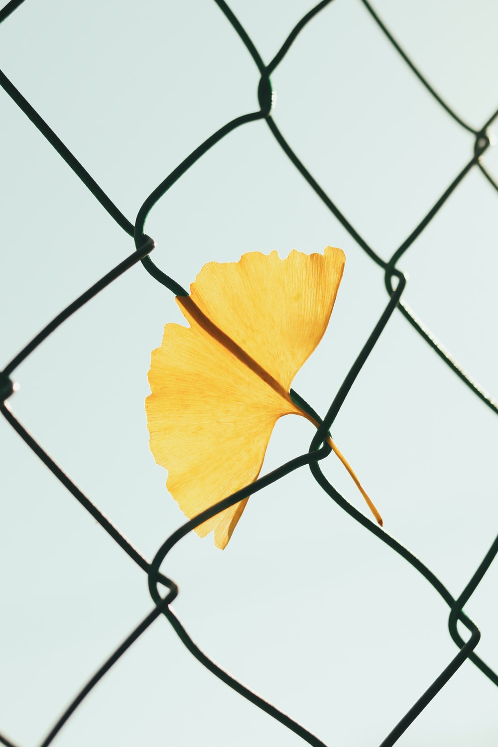 yellow flower on gray metal fence