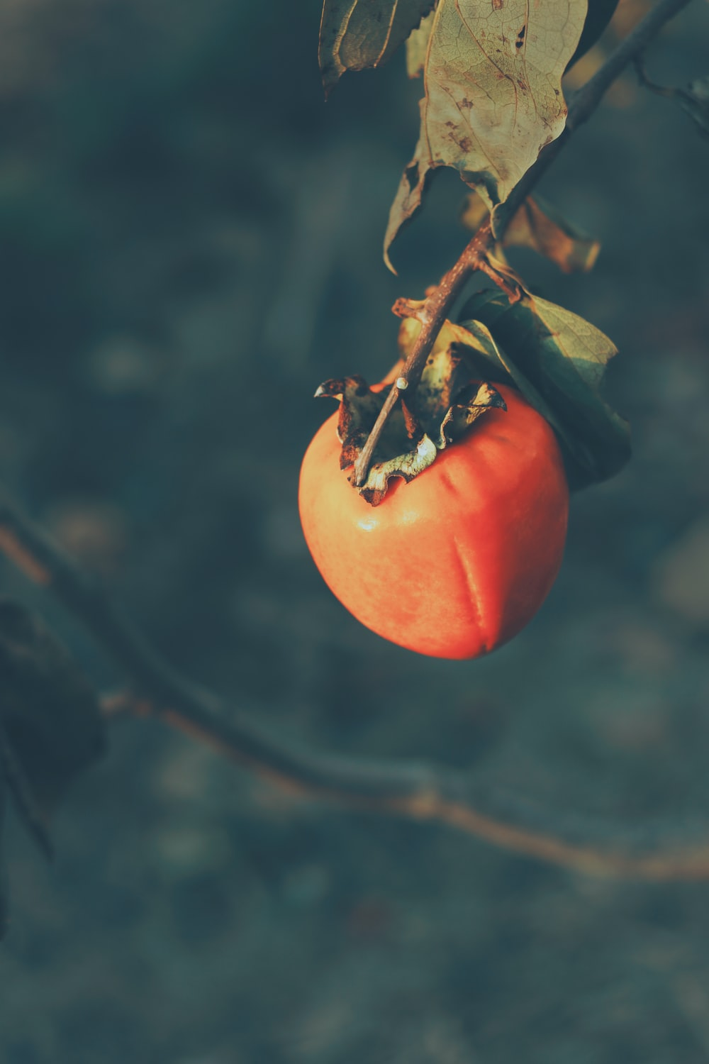 red tomato in close up photography