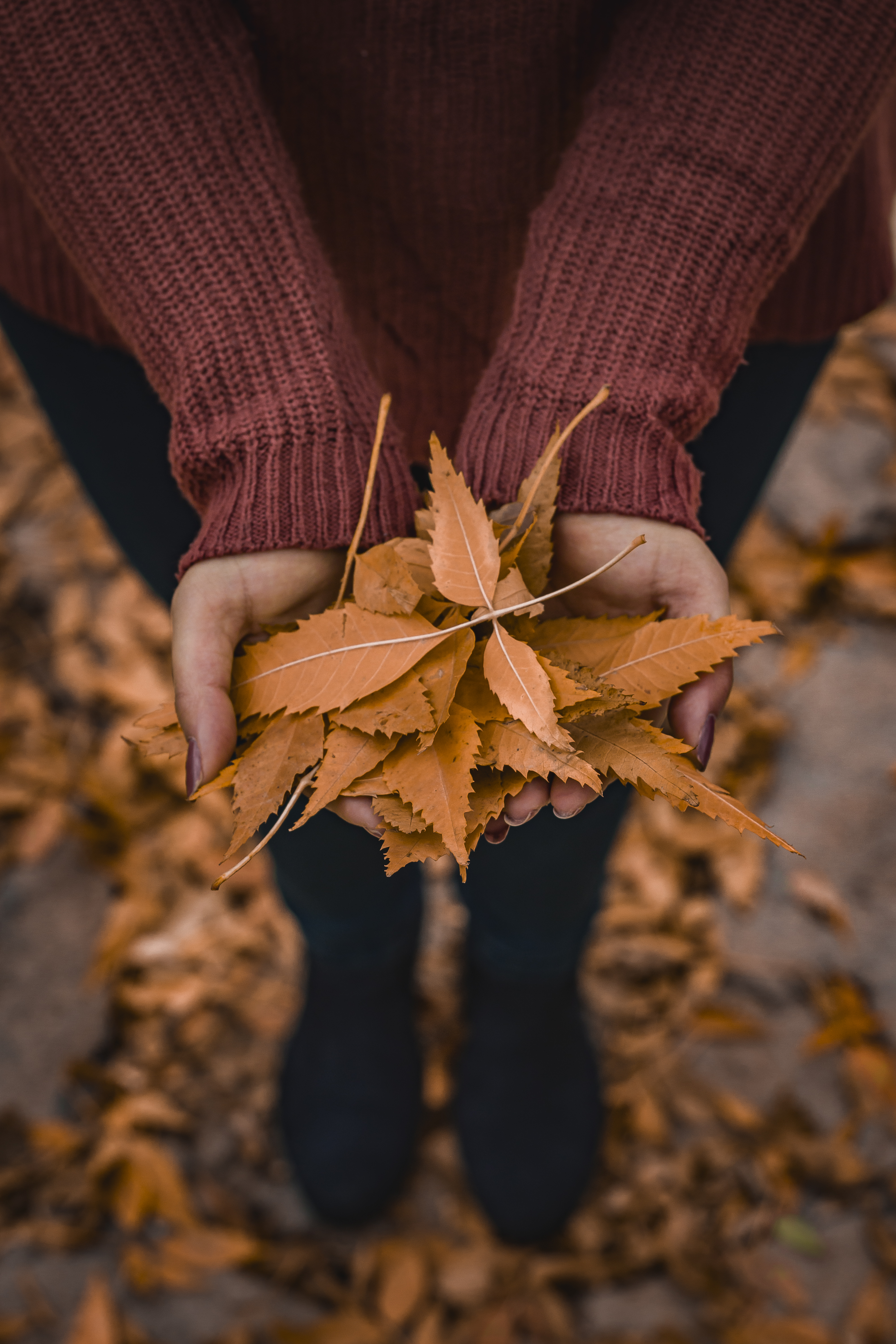 person-holding-brown-dried-leaf