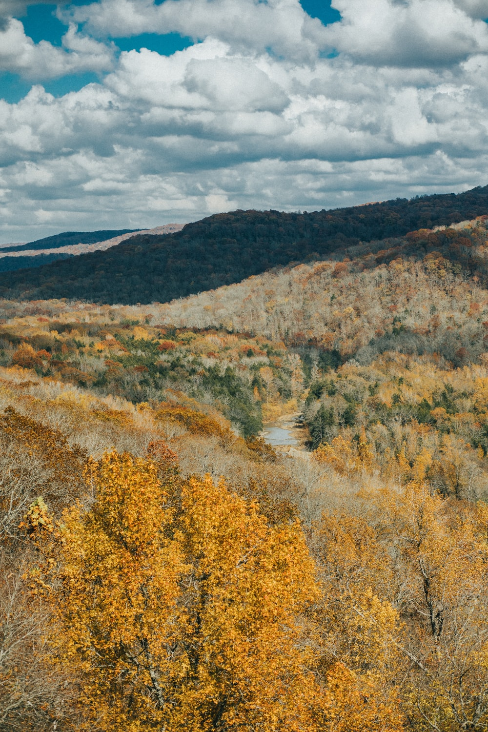 brown and green trees near brown mountain under white clouds during daytime