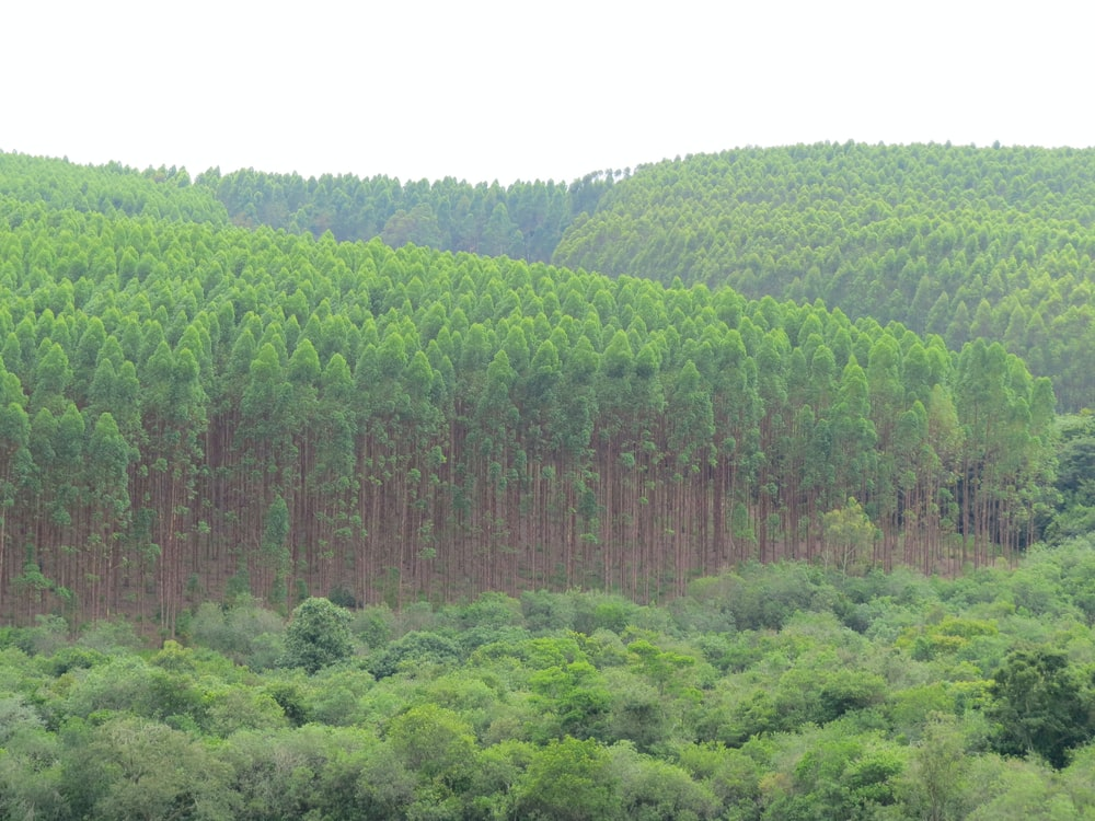 green trees on hill during daytime