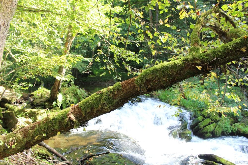 green moss on brown tree branch