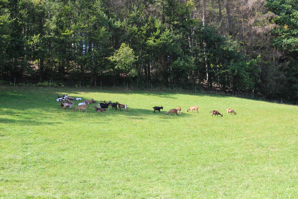 horses on green grass field near green trees during daytime