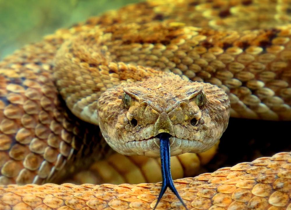 brown snake on brown soil