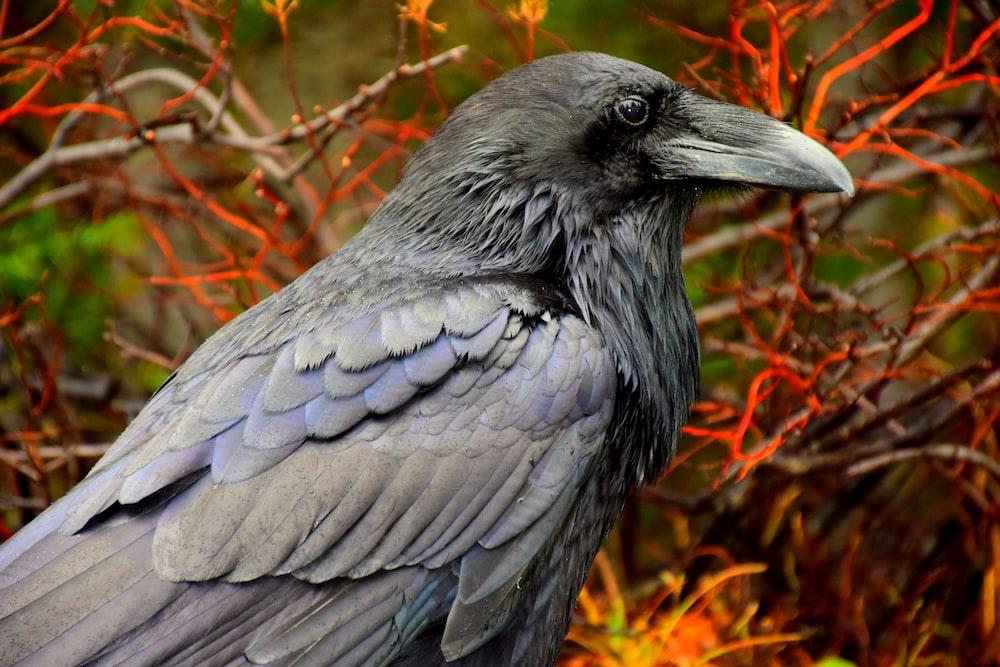 black bird on brown grass