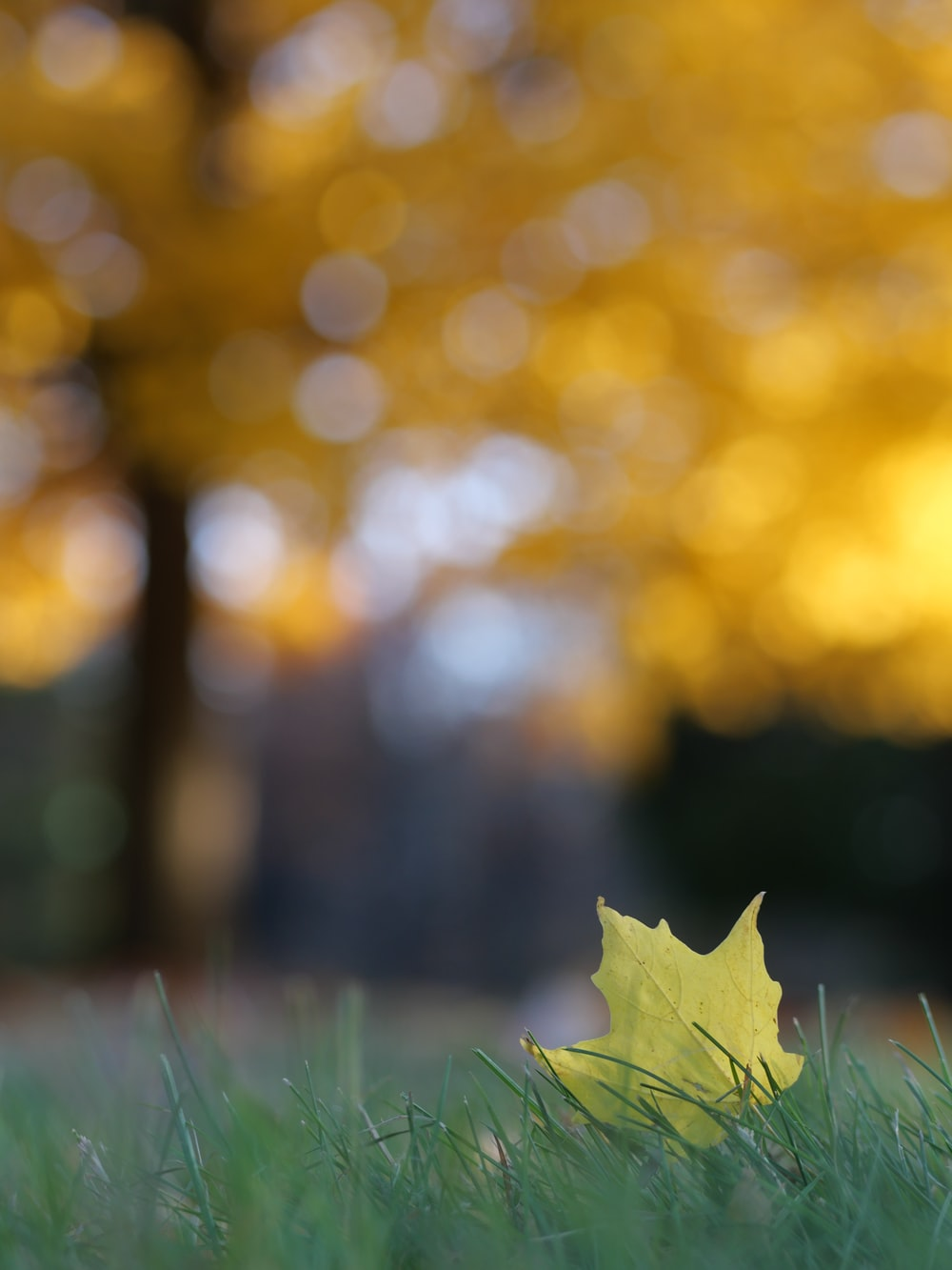 green maple leaf on green grass during daytime
