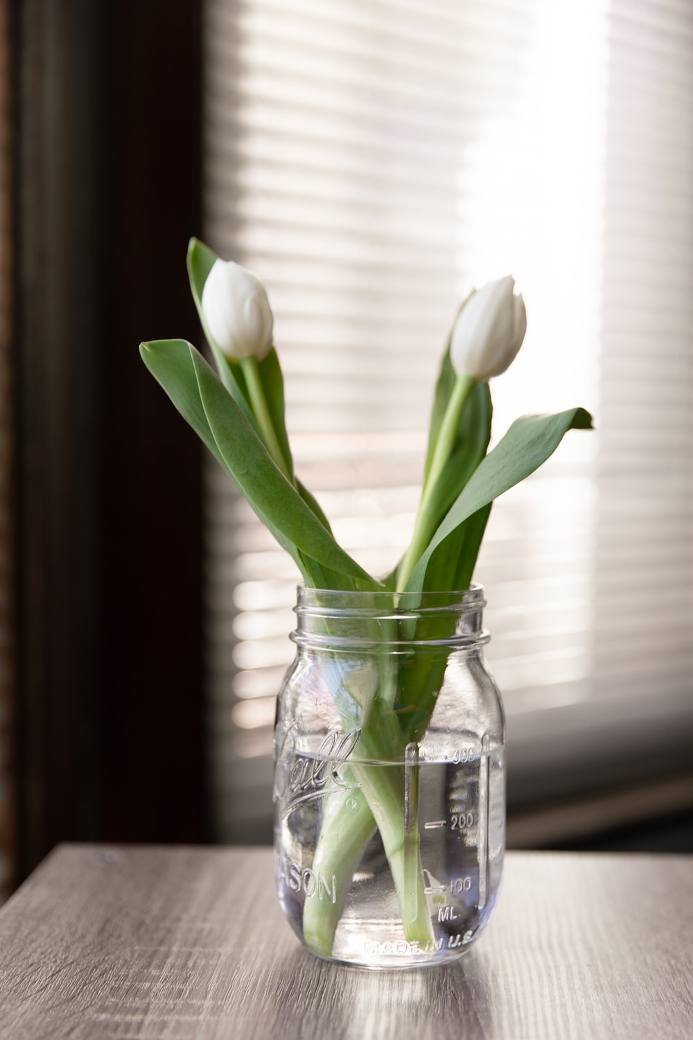 white tulips in clear glass jar