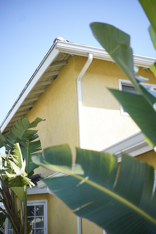 green banana tree beside white wooden house