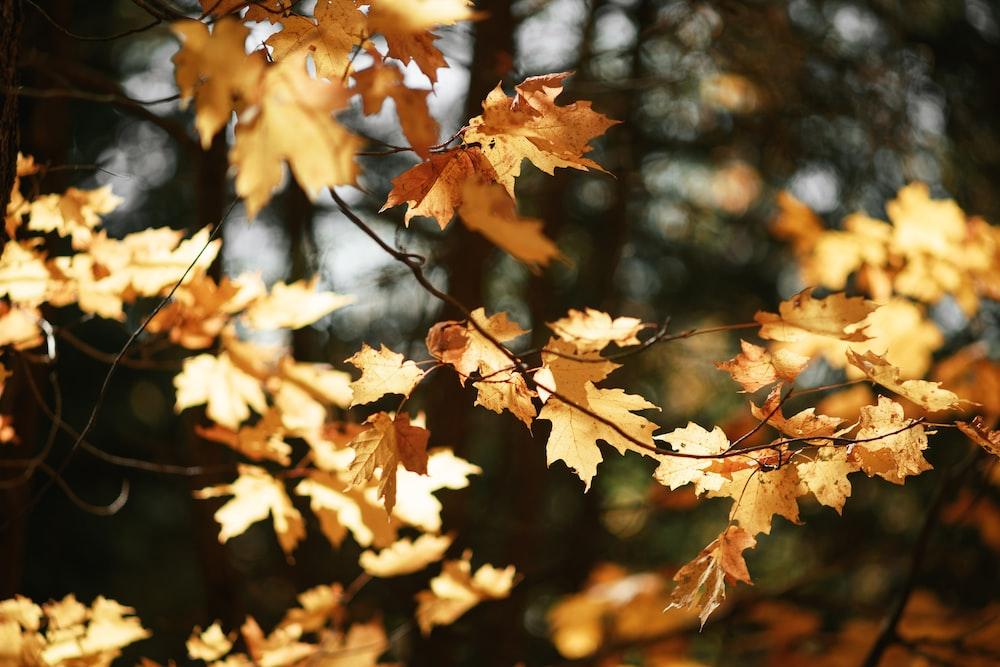 brown leaves on tree branch