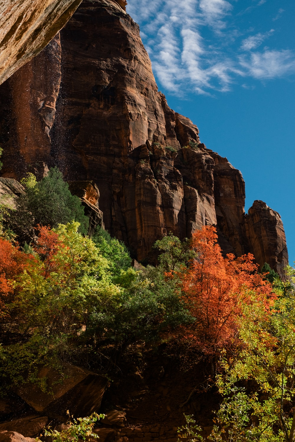 green trees near brown rocky mountain under blue sky during daytime