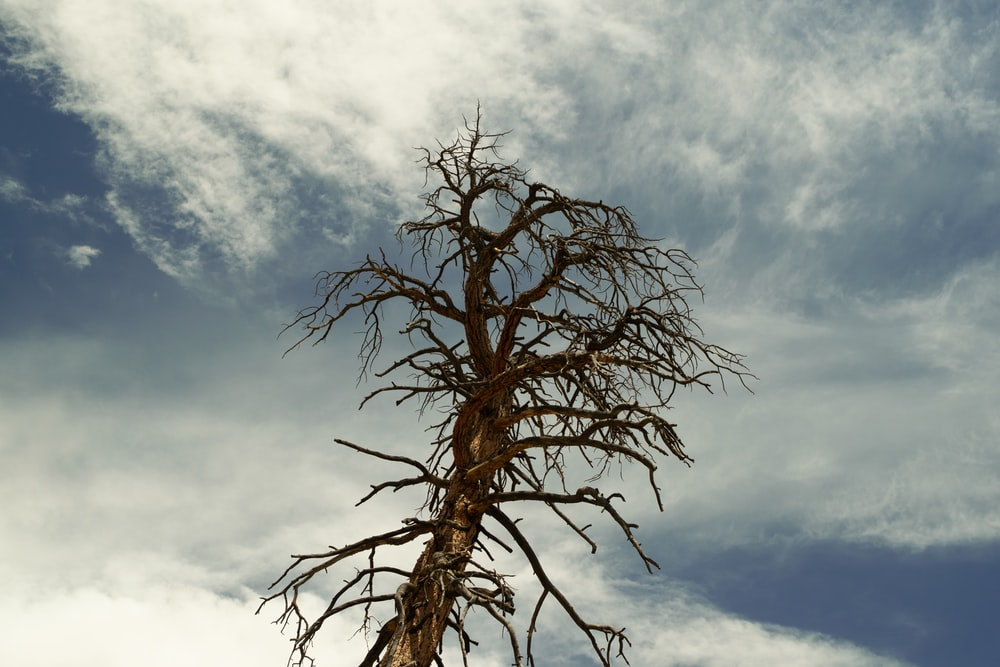 brown leafless tree under blue sky and white clouds during daytime
