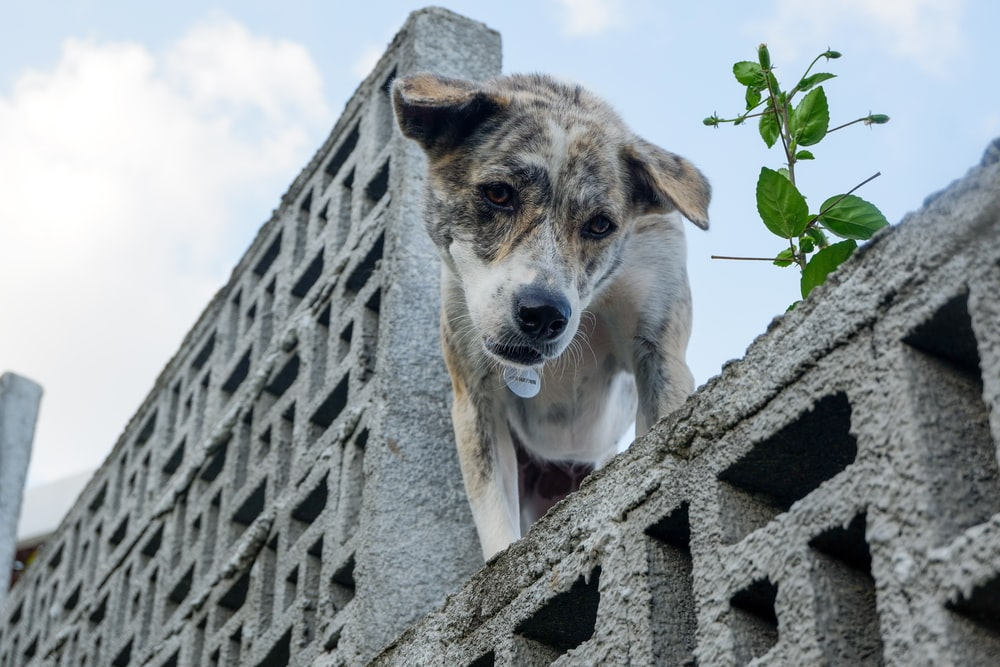 white and brown short coated dog on gray concrete wall during daytime