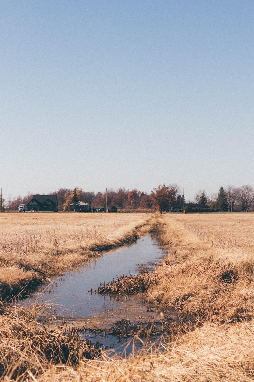 brown grass field near river under blue sky during daytime