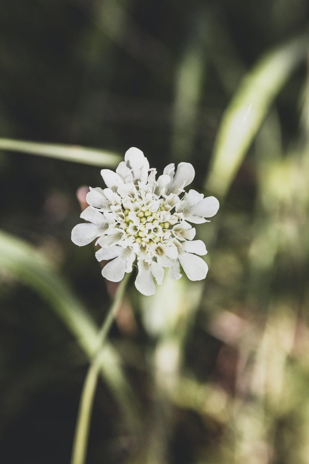 white flower in tilt shift lens
