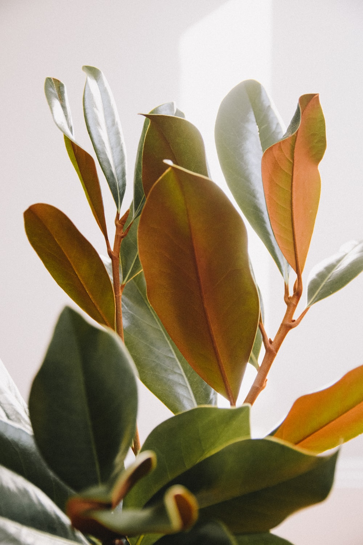 green leaves in white room
