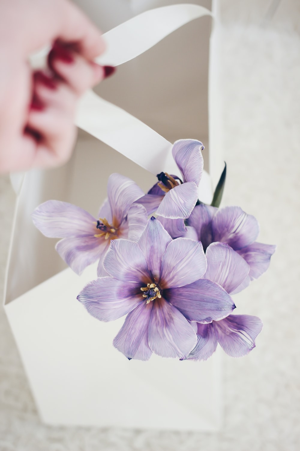 purple and white moth orchid in close up photography
