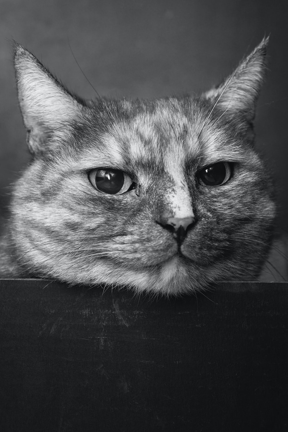 gray scale photo of cat