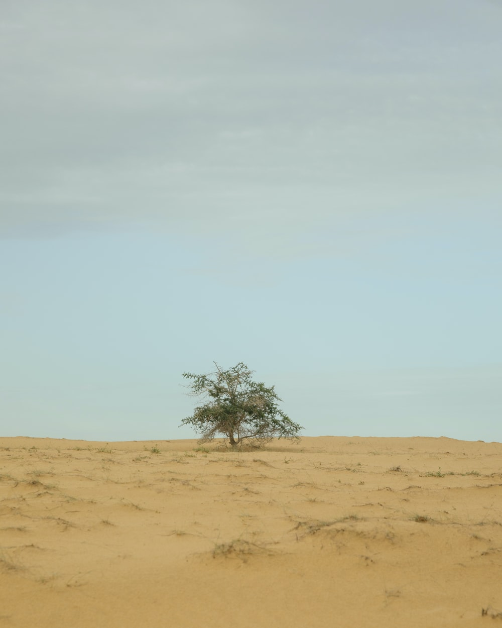 green tree on brown sand under white sky during daytime