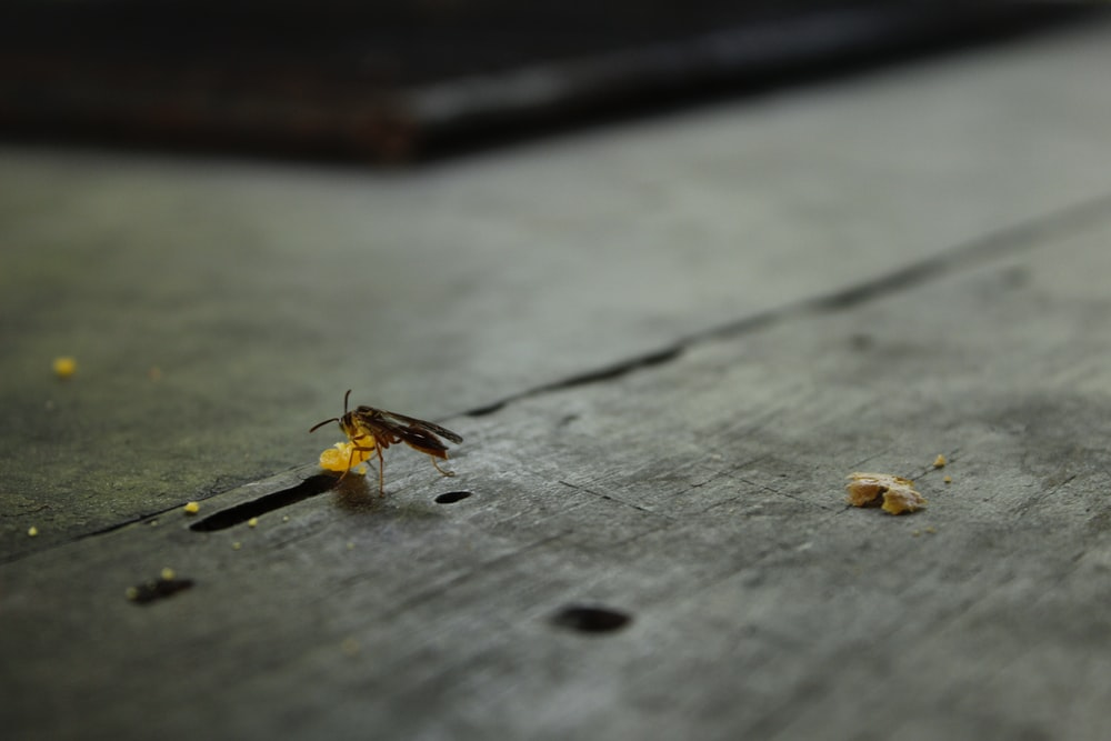brown and black bee on gray wooden plank