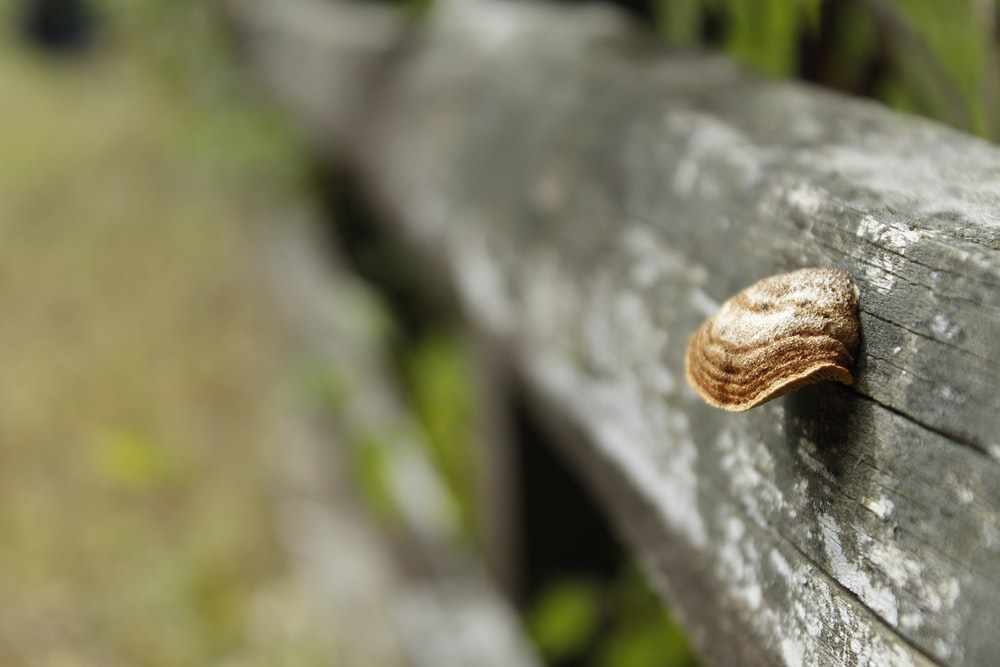 brown and white snail on gray tree trunk