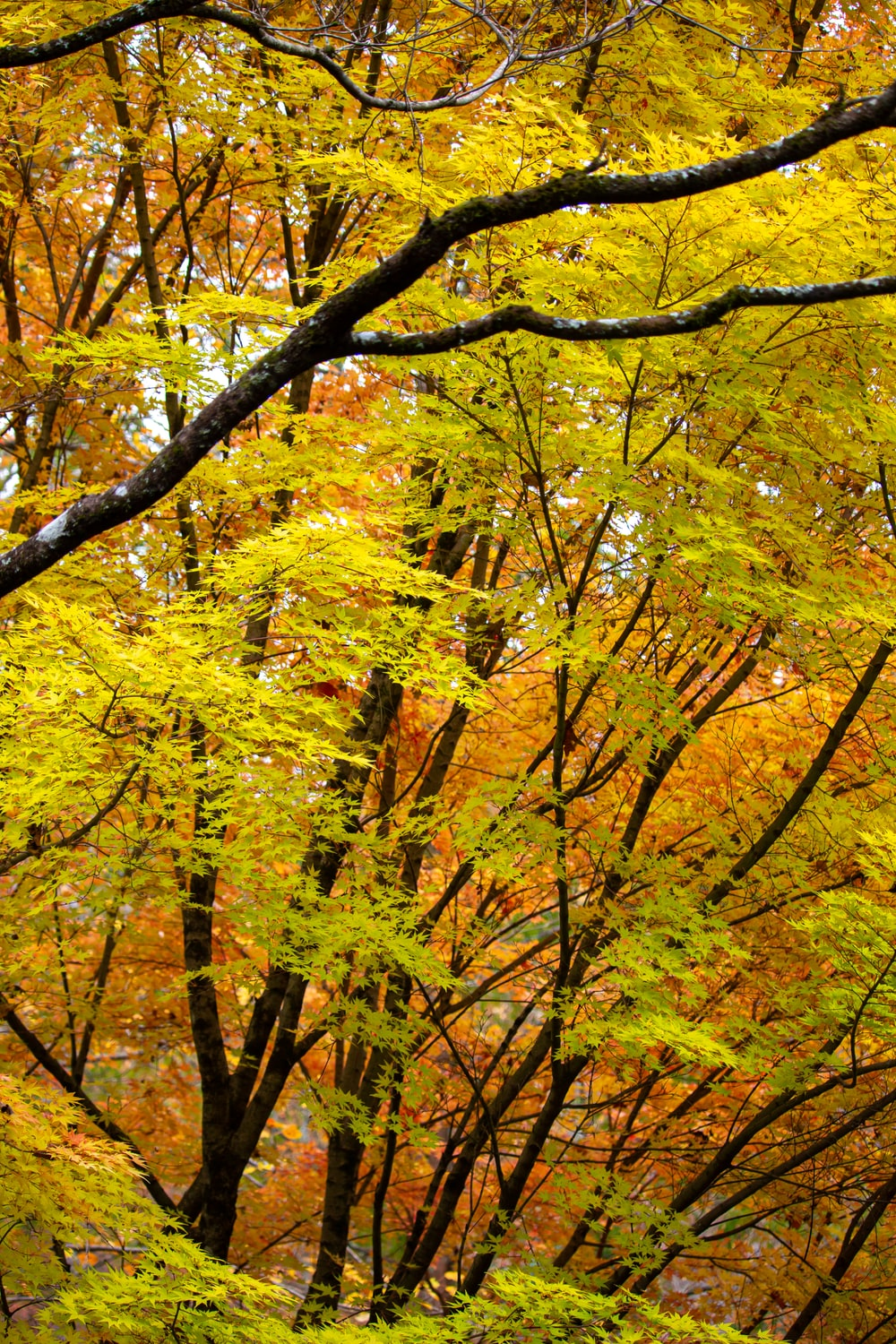 yellow and green trees during daytime
