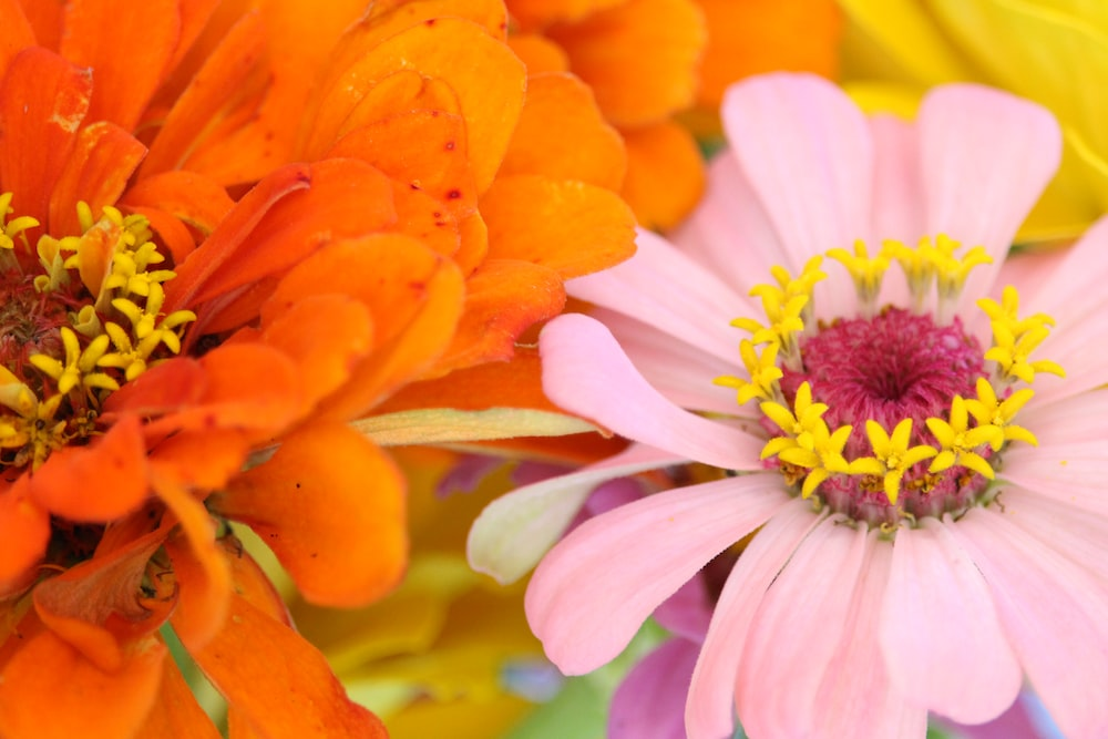 orange and white flower in close up photography