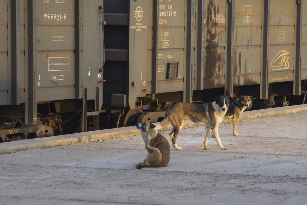 brown and white dogs on snow covered ground
