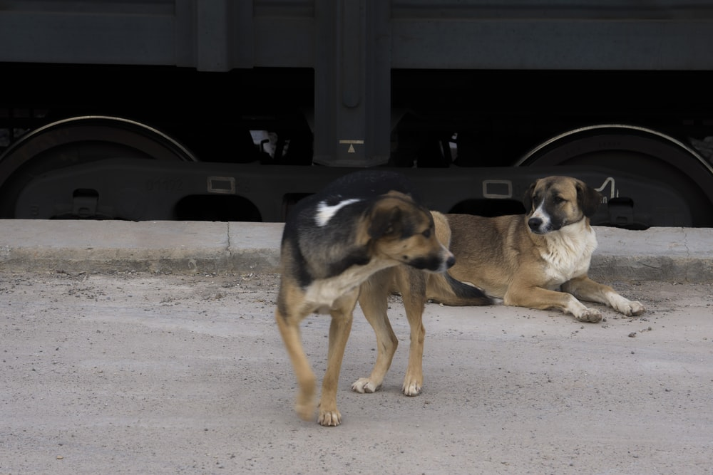 black and tan short coat medium sized dog