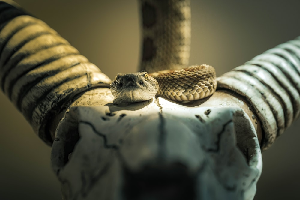 brown and black snake on white textile